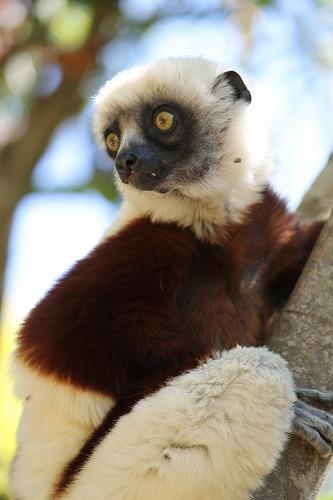 Madagascar (384)