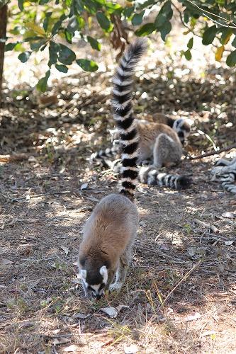 Madagascar (399)