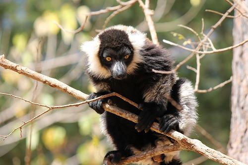 Madagascar (406)