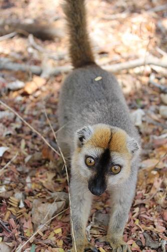 Madagascar (552)