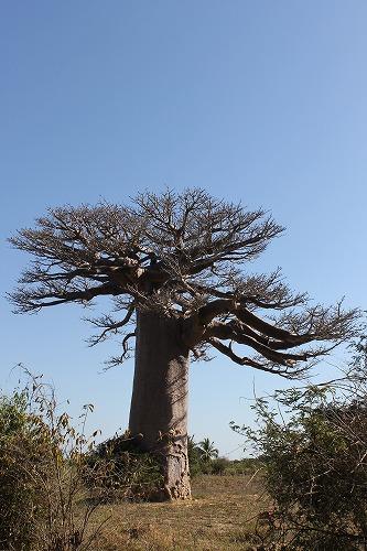 Madagascar (430)