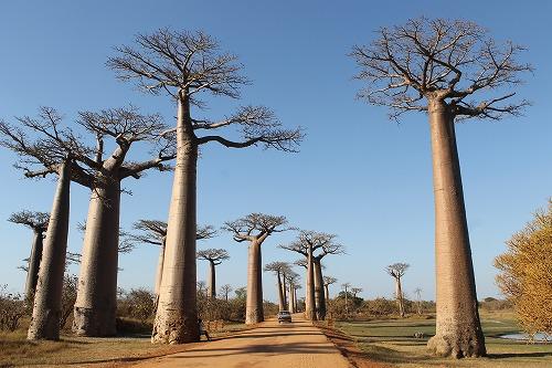 Madagascar (436)