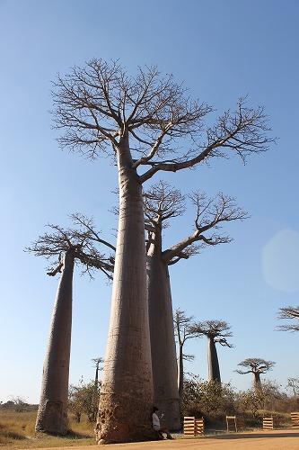 Madagascar (437)