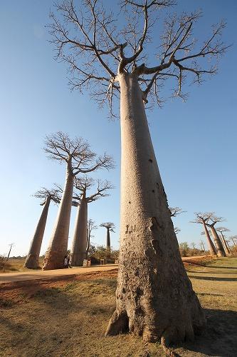 Madagascar (439)