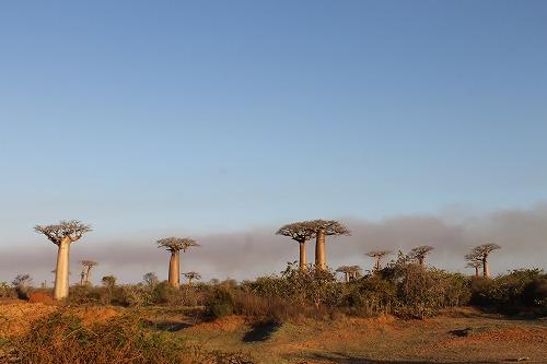 Madagascar (453)