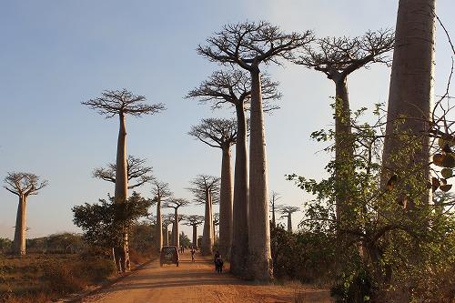 Madagascar (455)