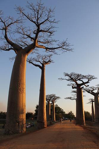 Madagascar (468)