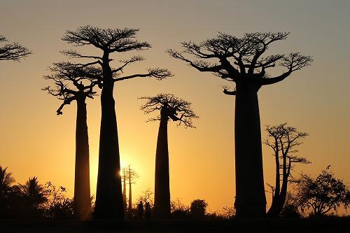 Madagascar (470)