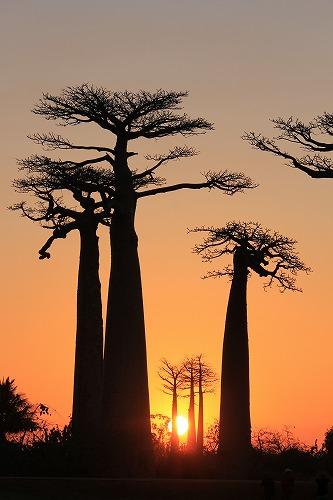 Madagascar (475)