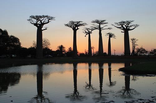 Madagascar (483)