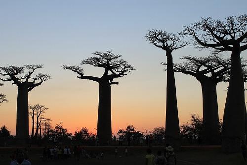 Madagascar (487)
