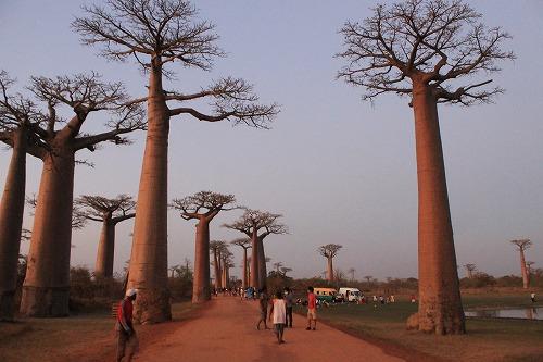 Madagascar (494)