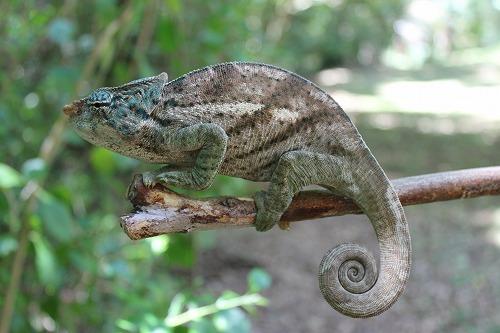 Madagascar (284)