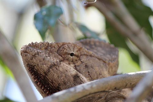 Madagascar (520)