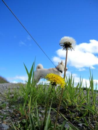 「花と向こうにイヌ」がスキ