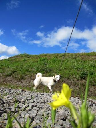 白いイヌ、まぶしっっ!!
