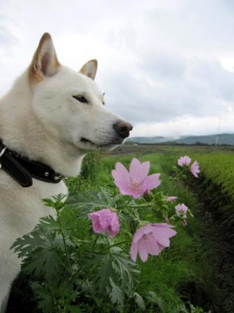 花のかわりに濡れました