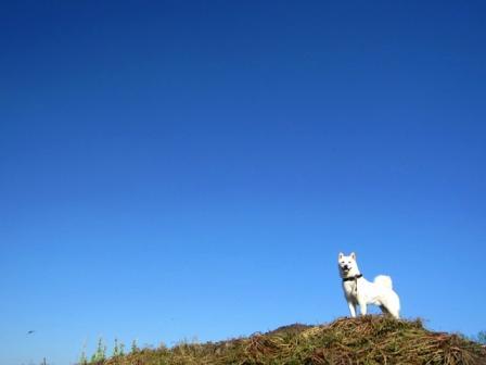 真っ白なイヌにみえる