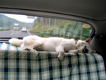 今朝の通勤車内