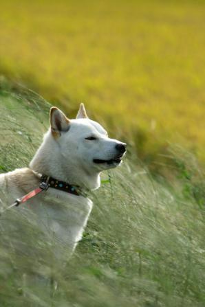 風を感じるイヌ
