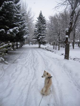 いつもの「北の散歩道」