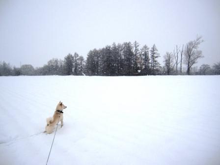 写ってないけど雪と風