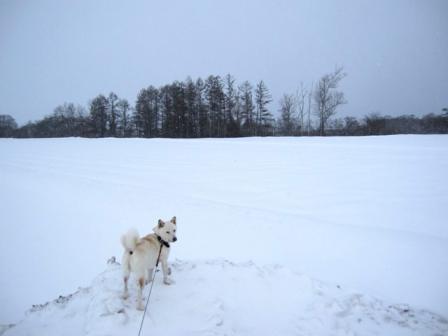 雨で雪の嵩も減りました