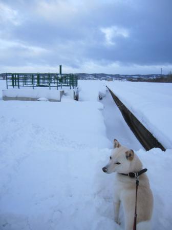 道路わきの雪も高くなってきた