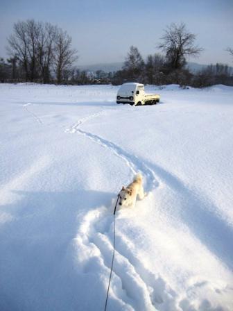 12日?・・・今現在はすごい雪の量です