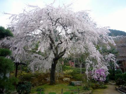 2013-03-29 台湾旅行・京都神戸の旅 059 (800x598)