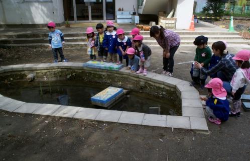 2006-11-08 25年度2日目4月8日遊具指導、小学生来園 015 (800x514)