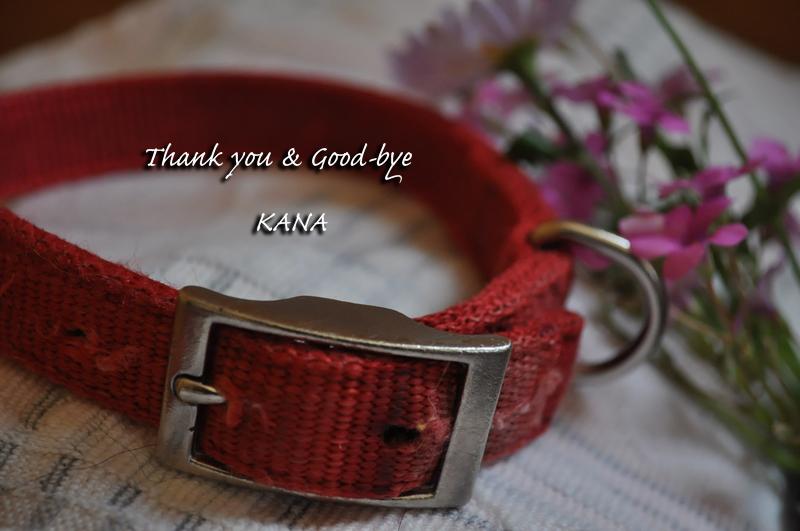 ありがとう愛犬カナ