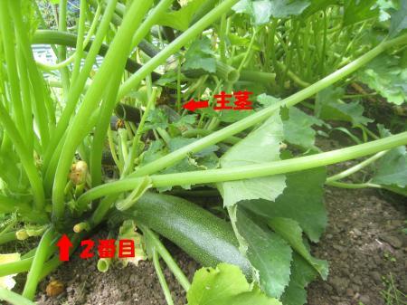 IMG_2884_kuki_convert_20120710185648.jpg