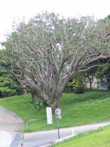 Juanaの歌-木その1