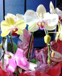 Juanaの歌-ランの花