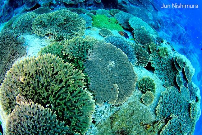 201206-サンゴ