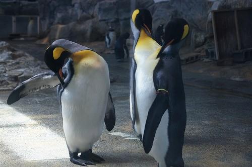 ペンギン水族館4