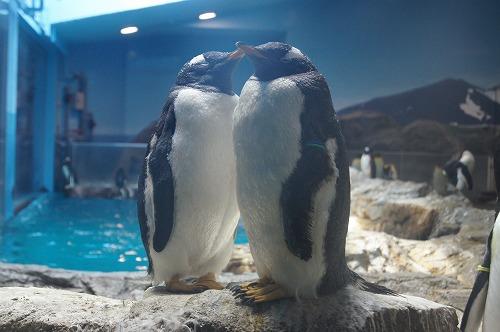 ペンギン水族館5