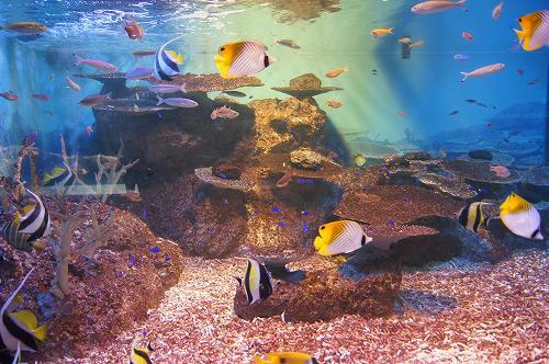 ペンギン水族館7