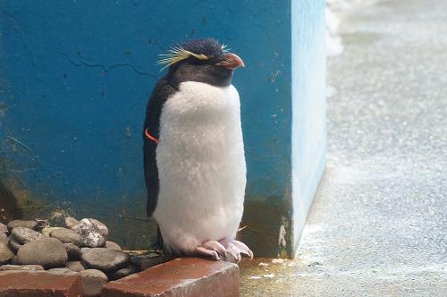 ペンギン水族館10