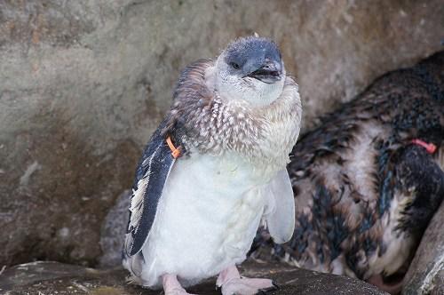 ペンギン水族館17