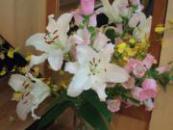 DSCF4791_convert_20121129190846.jpg