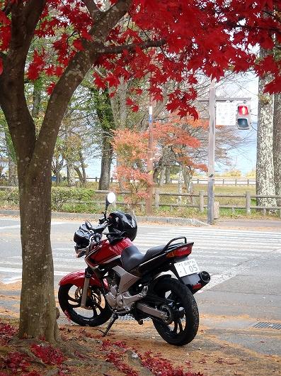 山中湖村役場付近20141108