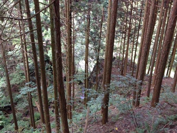 asoyaki037.jpg