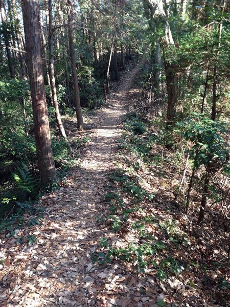 hamurakou014.jpg