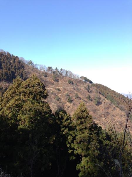 hannbaraosawa007.jpg