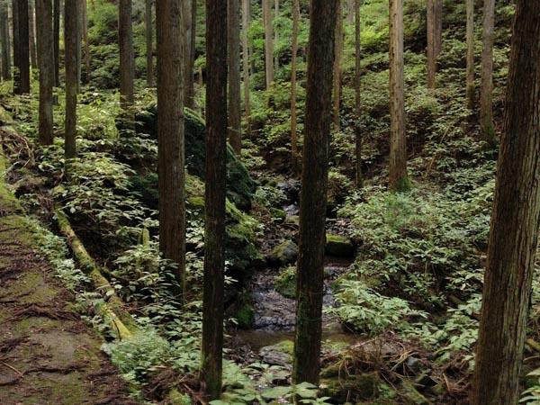 hinokiiwa009.jpg