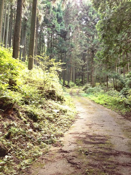 hinokiiwa011.jpg