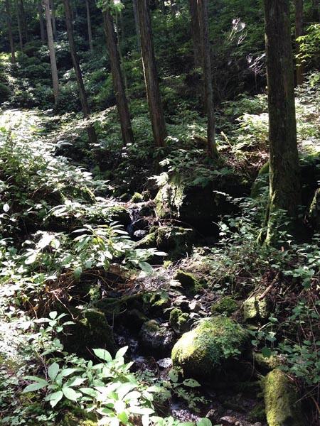 hinokiiwa012.jpg