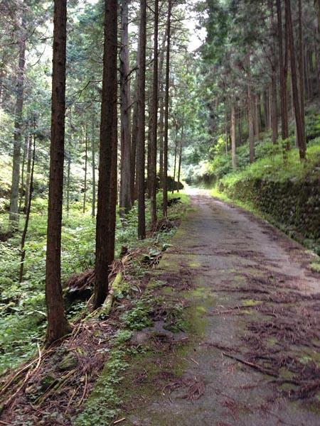 hinokiiwa013.jpg